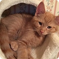Adopt A Pet :: Jack - Victor, NY