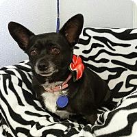 Adopt A Pet :: Kodi - Scottsdale, AZ