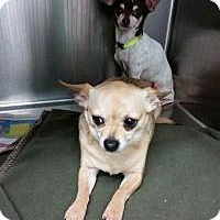 Adopt A Pet :: Moonpie and RC - Shawnee Mission, KS
