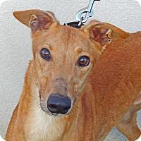 Adopt A Pet :: Dugan - Florence, KY
