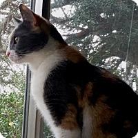 Adopt A Pet :: HARLEY QUINN - DeLand, FL