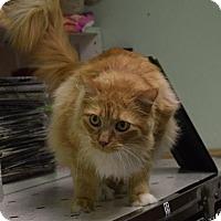 Adopt A Pet :: Peyton - Canastota, NY