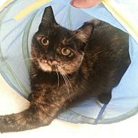 Adopt A Pet :: Anya - Toronto, ON