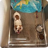 Adopt A Pet :: Paxton - Janesville, WI