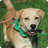 Adopt A Pet :: Potter - East Randolph, VT