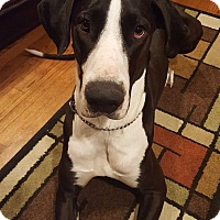 Adopt A Pet :: Reva Rae - Sheridan, IL