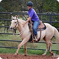 Adopt A Pet :: Skylar - McKinney, TX