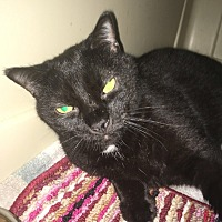 Adopt A Pet :: Baby - Stevensville, MD