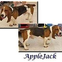 Adopt A Pet :: AppleJack - Marietta, GA