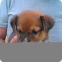 Adopt A Pet :: Scud - Conway, AR