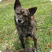 Adopt A Pet :: Saiko - Davie, FL