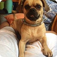 Adopt A Pet :: Freddie - Conway, AR