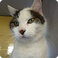 Adopt A Pet :: MARTIN - Madison, AL