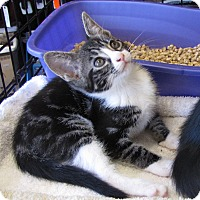 Adopt A Pet :: Hannah - bloomfield, NJ