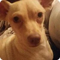 Adopt A Pet :: Nike - Glendale, AZ