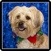 Adopt A Pet :: Juno - San Diego, CA