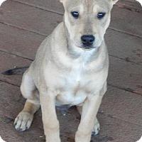 Adopt A Pet :: Gunner - Perris, CA