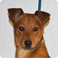 Adopt A Pet :: **RUSTY** MEET FEB 13TH! - Mukwonago, WI