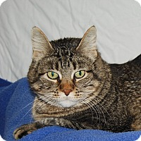 Adopt A Pet :: KitCat - Ridgway, CO