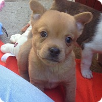 Adopt A Pet :: Hunter (ARSG) - Santa Ana, CA