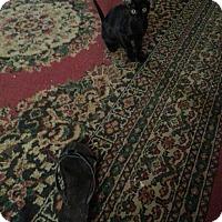 Adopt A Pet :: Essa - Marion, CT