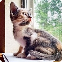 Adopt A Pet :: Madeline - Texarkana, AR