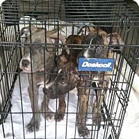 Adopt A Pet :: Tina's Pups (TH) - Tampa, FL
