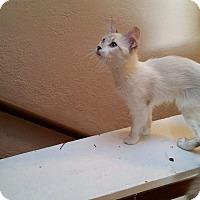 Adopt A Pet :: Floof - Ogden, UT