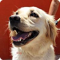 Adopt A Pet :: Dora - BIRMINGHAM, AL