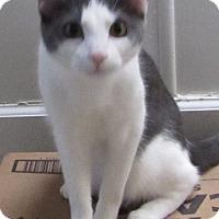 Adopt A Pet :: LILLIE BELL - Jackson, MO