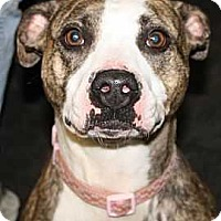 Adopt A Pet :: Flower - Fort Madison, IA