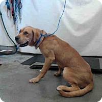 Adopt A Pet :: A651779 - Camarillo, CA