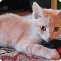 Adopt A Pet :: Ian - Evans, WV
