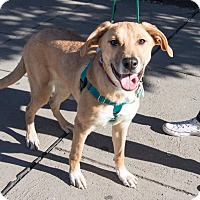 Adopt A Pet :: Maddie Ziegler - Jersey City, NJ