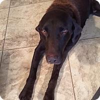 Adopt A Pet :: Satchmo - Phoenix, AZ