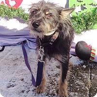 Adopt A Pet :: Granitt - West Chicago, IL