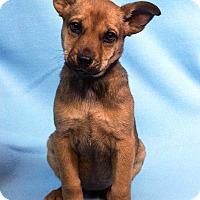 Adopt A Pet :: SALLY - Westminster, CO