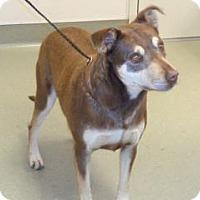 Adopt A Pet :: Dakota - Wildomar, CA