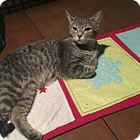 Adopt A Pet :: Sweet Tart - Warren, MI