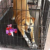 Adopt A Pet :: Leroy - Fowler, CA