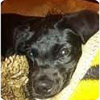 Adopt A Pet :: Lucky - Justin, TX