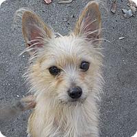 Adopt A Pet :: Harriet - Ormond Beach, FL