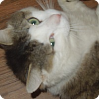 Adopt A Pet :: Ambrose - Medina, OH