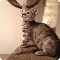 Adopt A Pet :: Gloria - East Hanover, NJ