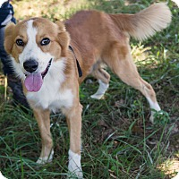 Adopt A Pet :: *Leroy - PENDING - Westport, CT