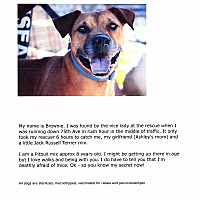 Pit Bull Terrier Mix Dog for adoption in Phoenix, Arizona - Brownie