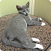 Adopt A Pet :: Fred H. - Marietta, GA