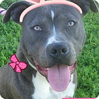 Adopt A Pet :: VICKI-Low Fees/Spayed - Red Bluff, CA