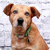 Adopt A Pet :: Sid - Clarkston, MI