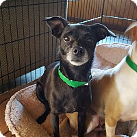 Adopt A Pet :: Lily - She's Just Perfect! - Bend, OR